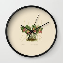 File:R. Warner & B.S. Williams - The Orchid Album - vol 01 - plate 005 Wall Clock