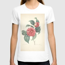 camellia japonica Redoute Roses 4 T-shirt
