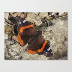 butterfly 2016 Canvas Print