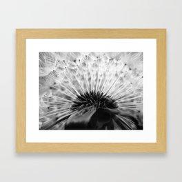 Inside A Dandelion Framed Art Print