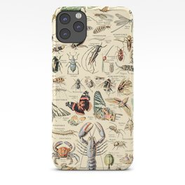 Vintage Insect Identification Chart // Arthropodes by Adolphe Millot 19th Century Science Artwork iPhone Case