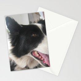 boating dog Stationery Cards