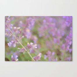 lavender violet Canvas Print