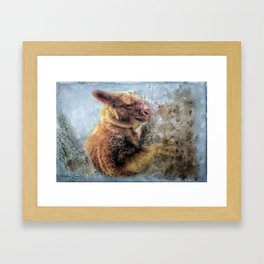 Tree Kangaroo Framed Art Print