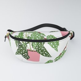 Simple Potted Polka Dot Begonia Plants in White Fanny Pack