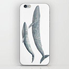 Blue whales (Balaenoptera musculus) - Blue whale iPhone Skin