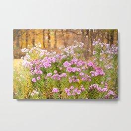 Pink Aster flowering plants Metal Print