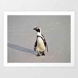 African Penguin Boulders Beach, Cape Town, South Africa Art Print