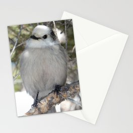 Gray Jay in Rocky Mountain Stationery Cards
