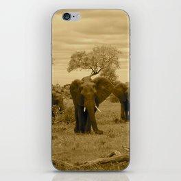 Elephant sepia iPhone Skin