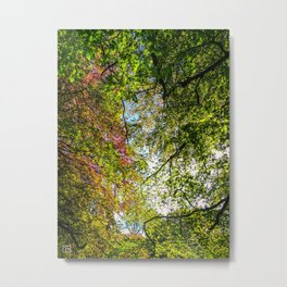 Tree Leafs. Metal Print