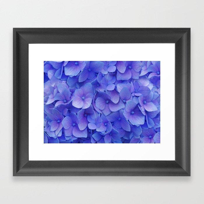 Hydrangea blue Framed Art Print