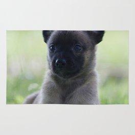 A yellow Shepherd puppy Spok Rug
