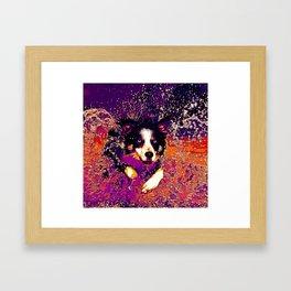 border collie jumping in water vector art late sunset Framed Art Print