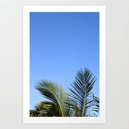 Palm Tree Sky Art Print