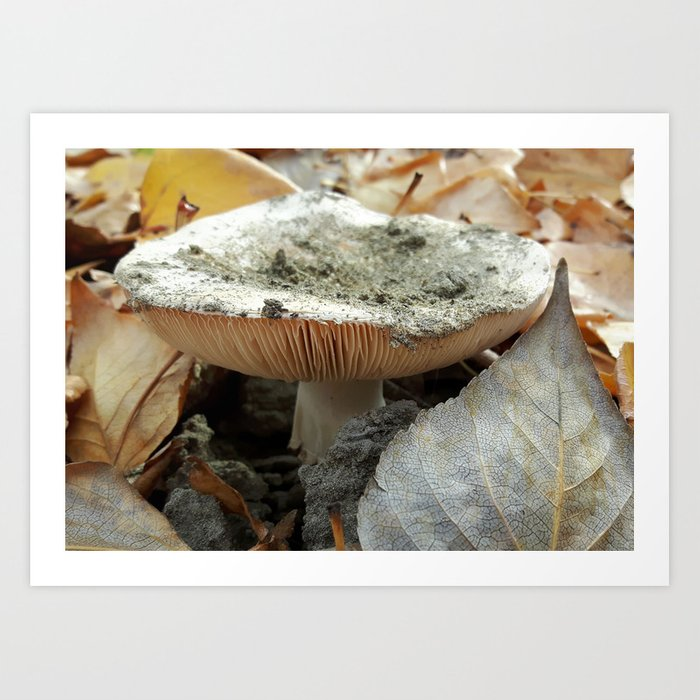 Mushroom Emerging from the Sand in Fall Art Print