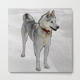 Quincy Sled Dog Metal Print