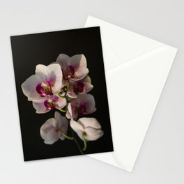 Orchid Branch Stationery Cards