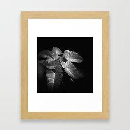 Elephant Ears in the Dark Framed Art Print