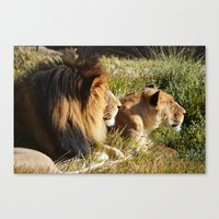 lions Canvas Prints featuring Lions by U.Cervantes