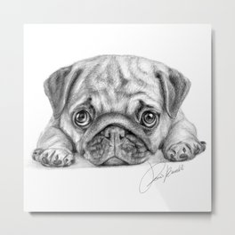 pug dog - carlino - carlin - doguillo Metal Print