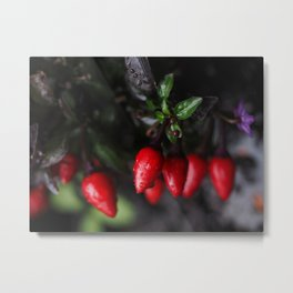 Red Hot Garden Salsa Chili Peppers. Metal Print