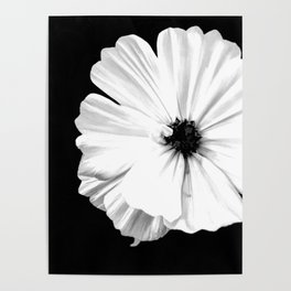 Springtime Aneomone In Black And White Poster