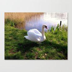 Swan lake Canvas Print