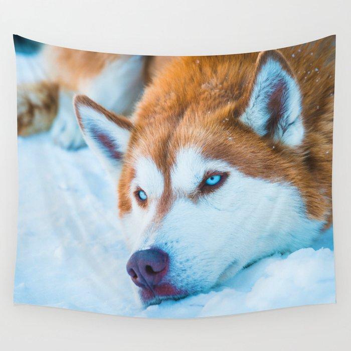 Sleepy Orange Siberian Husky Color Wall Tapestry By Nocolordesigns