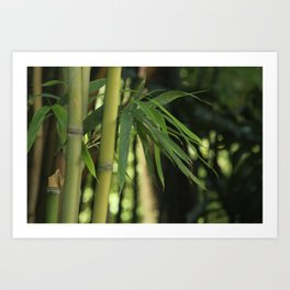 Bamboo Thicket Art Print