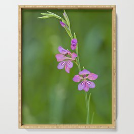 Beauty in nature, wildflower Gladiolus illyricus Serving Tray
