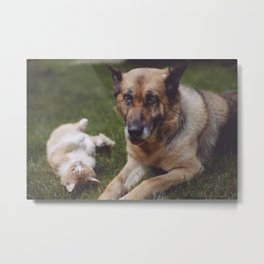 Dog & cat Metal Print