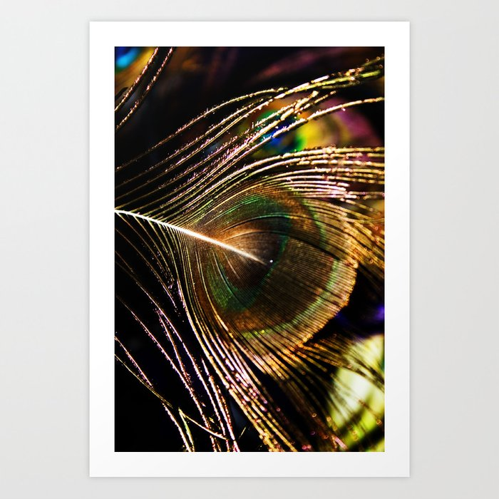 Peacock Feather #2 Art Print