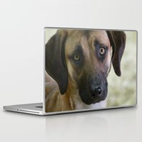 the hound Laptop & iPad Skins featuring Hound Pup by IowaShots