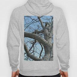 Winter Tree in Beverly, MA Hoody
