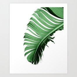 BANANA PALM LEAF Art Print