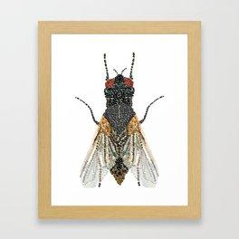 House Fly Bedazzled, Transparent Background Framed Art Print
