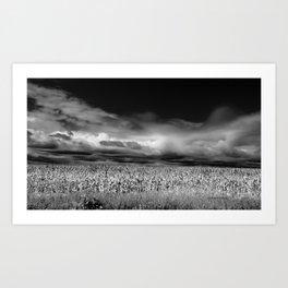 Corn and Clouds Art Print