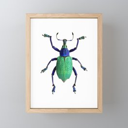 Eupholus Weevil Beetle Framed Mini Art Print