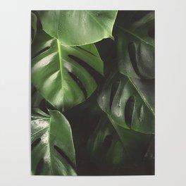 Monstera Leaves Poster