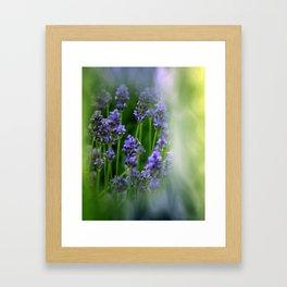 waiting for lavender blossoms  -05- Framed Art Print