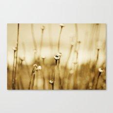 Nature Sleeps Canvas Print