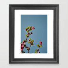 Ribes Plant Framed Art Print