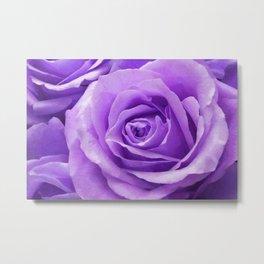 Violet roses Metal Print