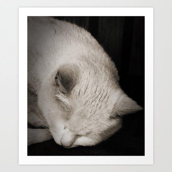 The Sleeping Cat  Art Print