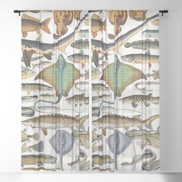 Adolphe Millot - Poissons A - French vintage nautical poster Sheer Curtain