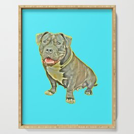 beautiful canine female dog smiles aquamarine perro fotografia american bully fondo azul Serving Tray