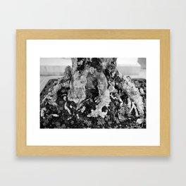 Bonsai 1 Framed Art Print