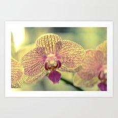 Orchid Ⅲ Art Print