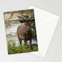 An Evening Swim Stationery Cards